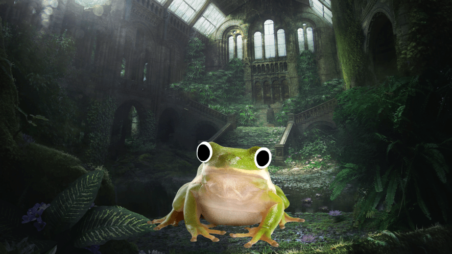 Frog sitting in abandoned building