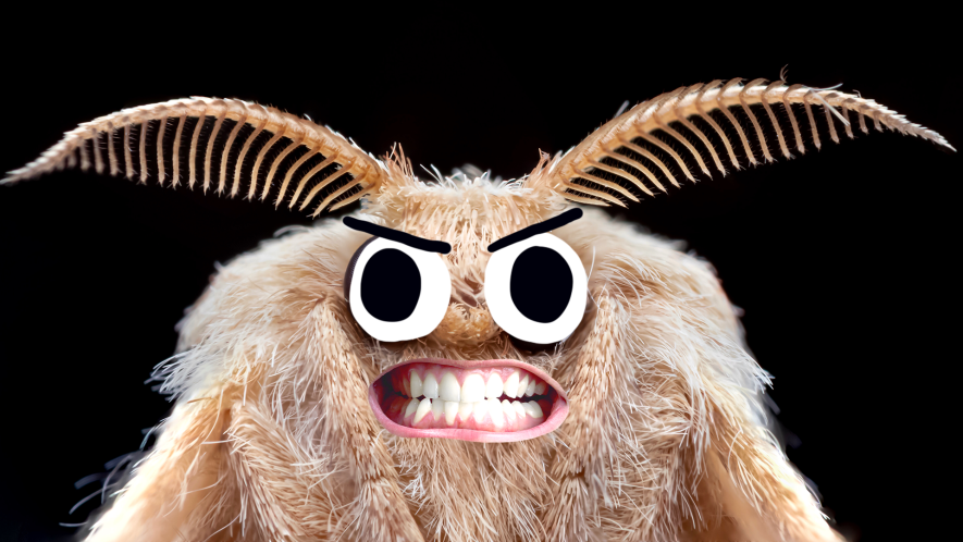 Moth with angry face