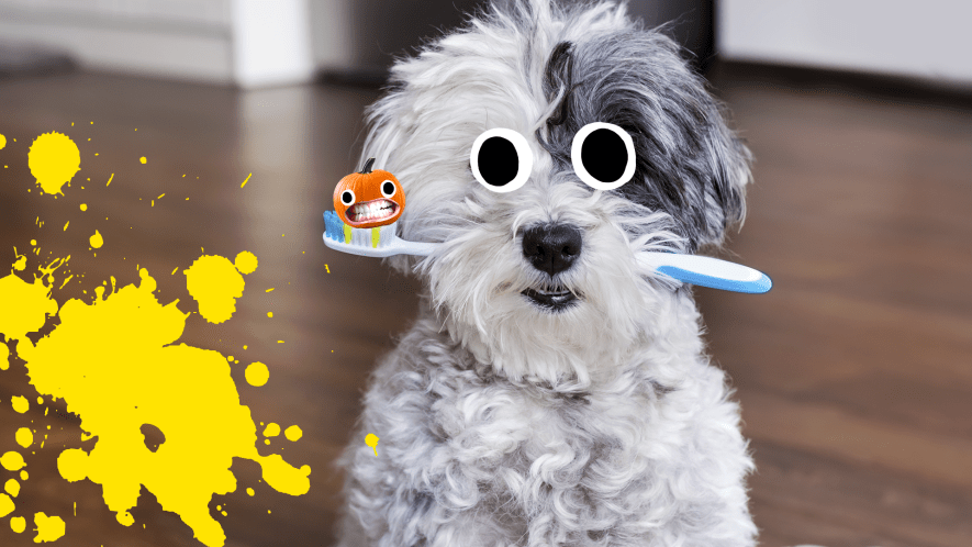Dog with toothbrush with goody pumpkin and yellow splat