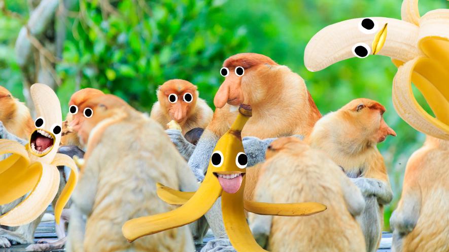 Monkeys and goofy bananas