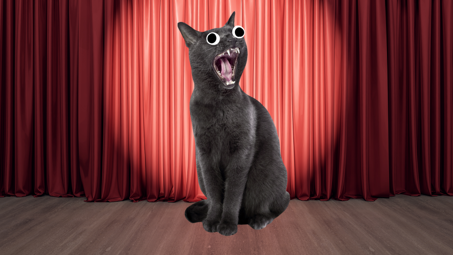Screaming cat on curtain background