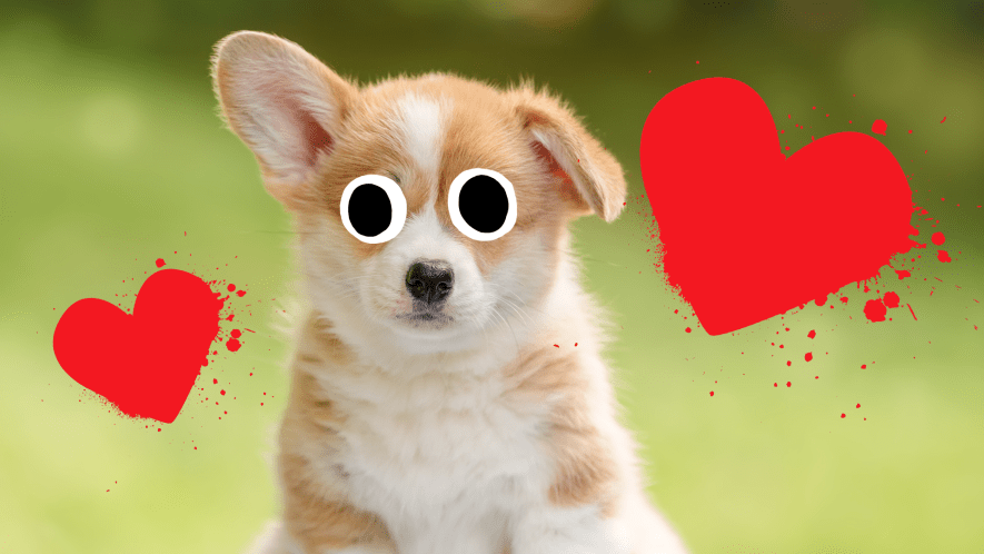 Puppy with love hearts