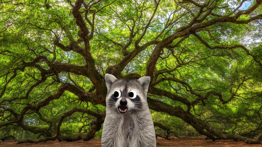 Oak tree with Beano raccoon