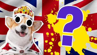 Royal Family Quiz Thumbnail