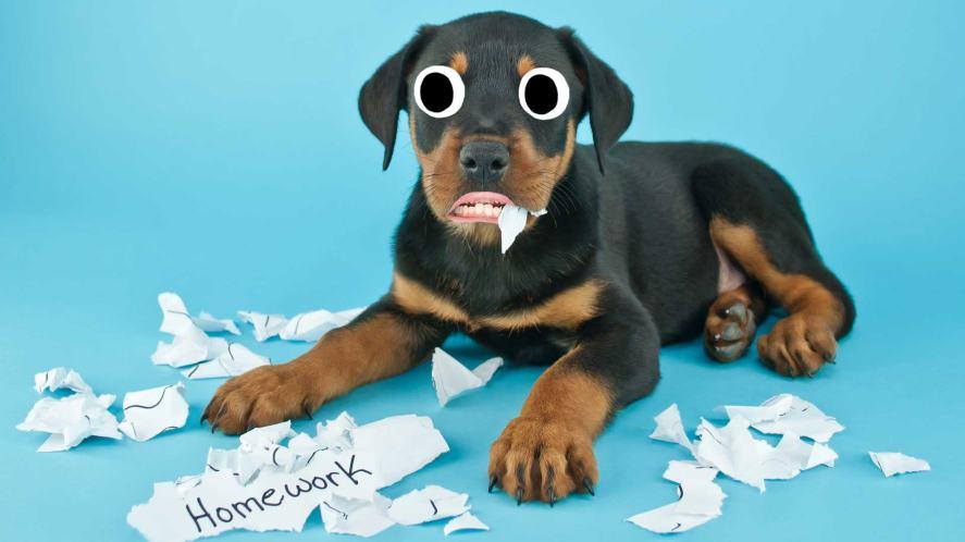 A dog chomping through your homework
