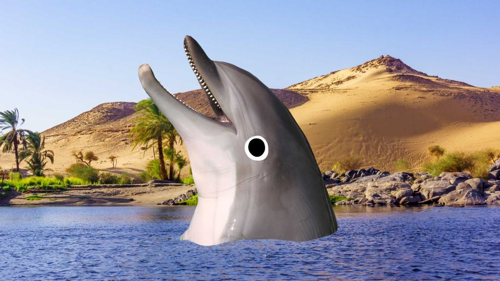 A dolphin in the Nile river