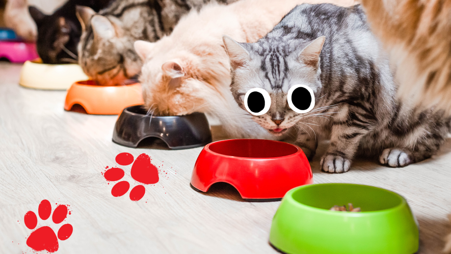 A group of cats eat from a variety of bowls