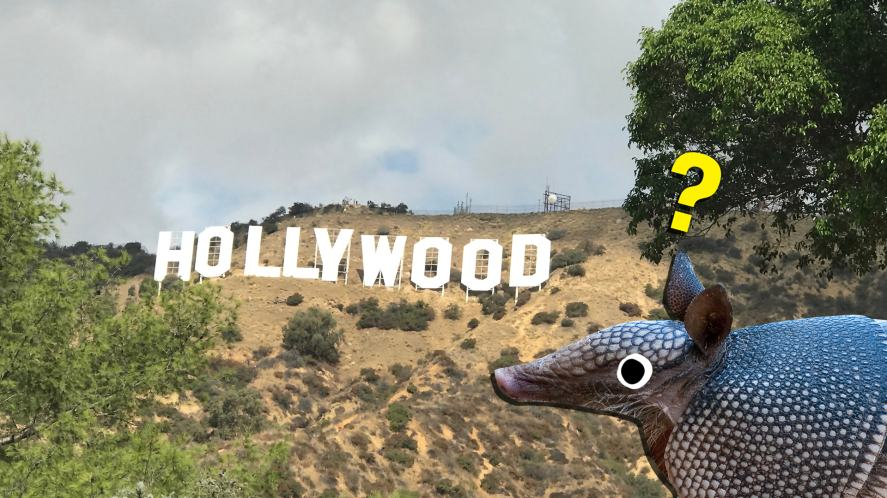 An armadillo looks at the Hollywood sign in Los Angeles