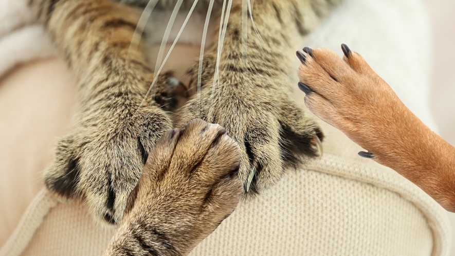 This is an image of cat's paws