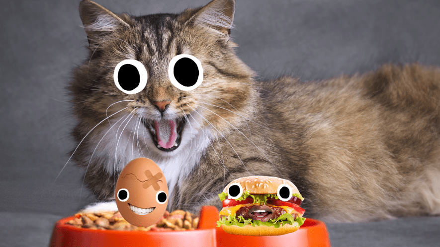 A cat with a bowl of cat food, an egg and a burger