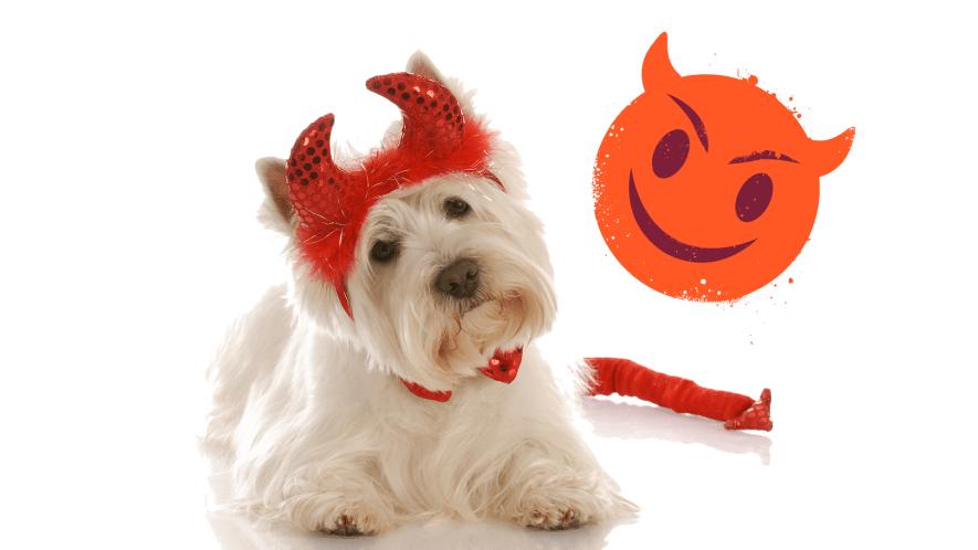 A fluffy dog wearing fancy dress horns