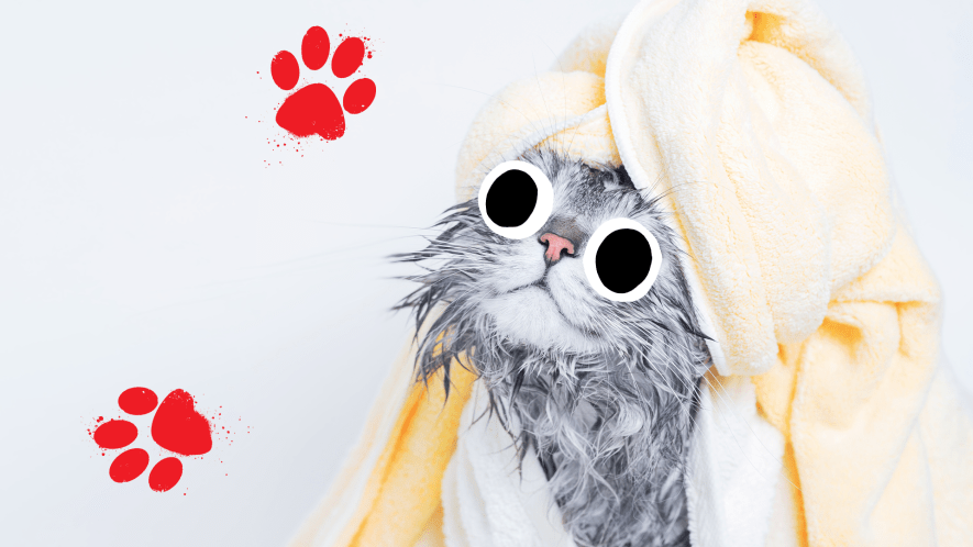 A cat wrapped in towels after a luxurious bath