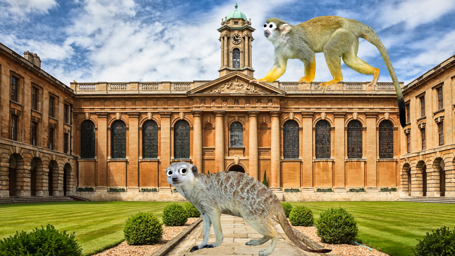 A university with a meerkat and a monkey roaming the grounds