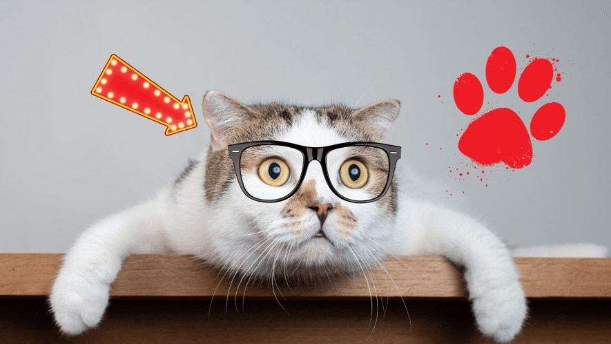 A cat wears glasses, and looks exhausted from a tough day of napping