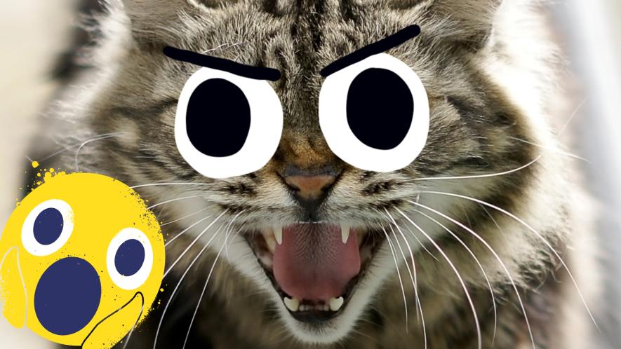 A cat hissing at a shocked emoji