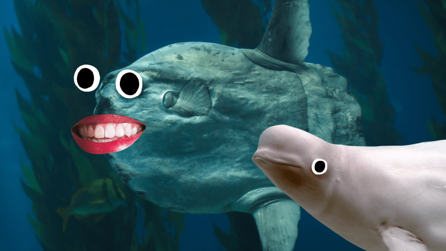 A fish and a Beluga whale