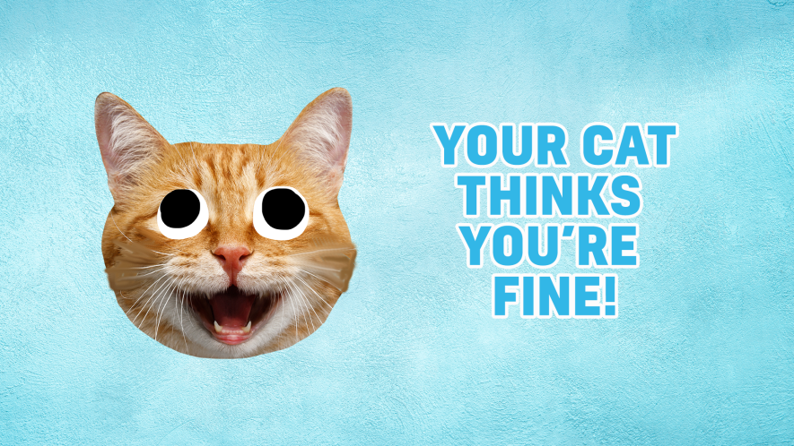 Result: Your cat thinks you're fine!