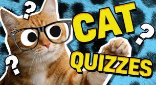 Cat Quizzes