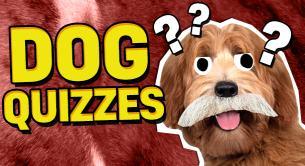 Dog Quizzes