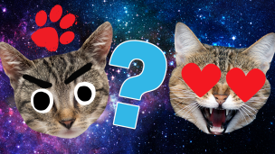 Does Your Cat Love You Quiz