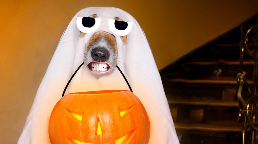 A dog in a ghost costume