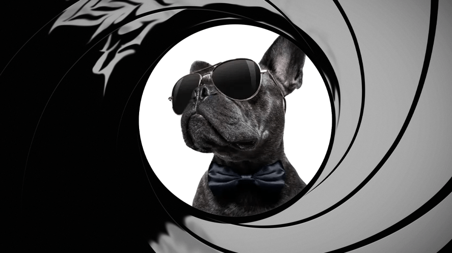 A spy dog in sunglasses and bowtie