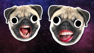 Pug Jokes