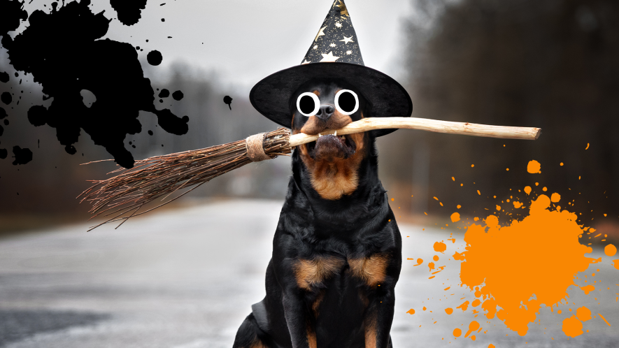 Dog dressed as witch holding broomstick in teeth with splats