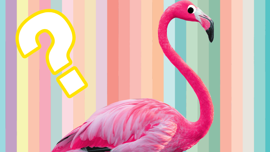 A flamingo and question mark on rainbow background