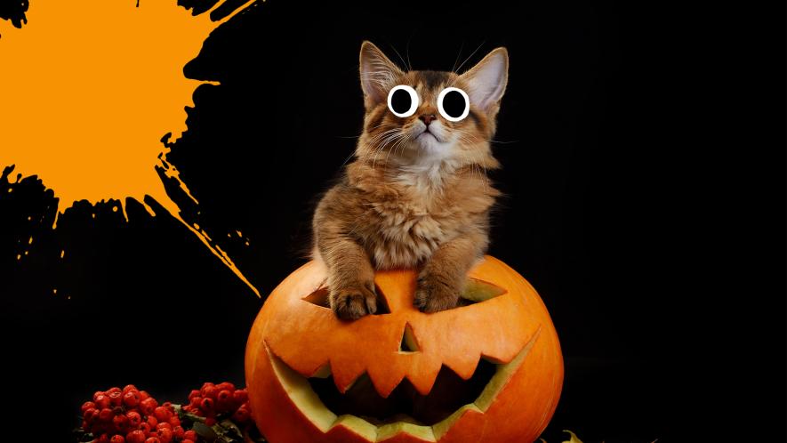 Kitten in pumpkin on black background with orange splat