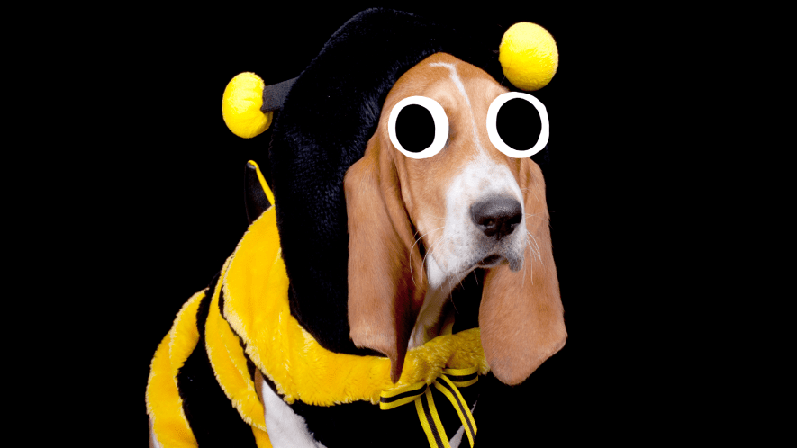 Dog in bee costume on black background