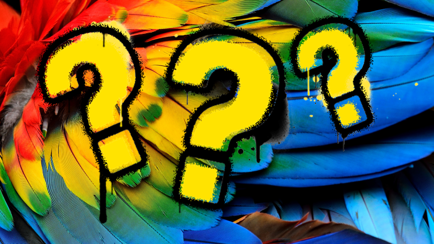 Question marks on a parrot feather background