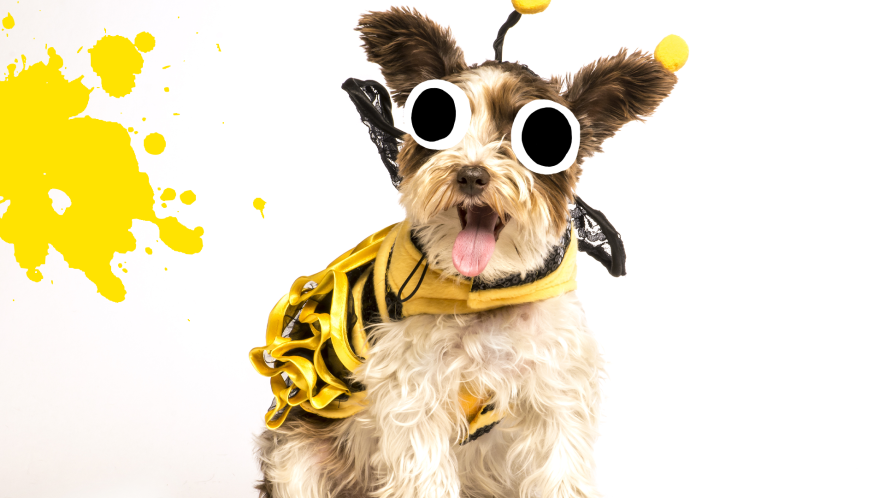 Happy dog in bee costume on white background