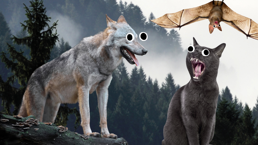 Wolf, bat and cat in forest with goofy eyes