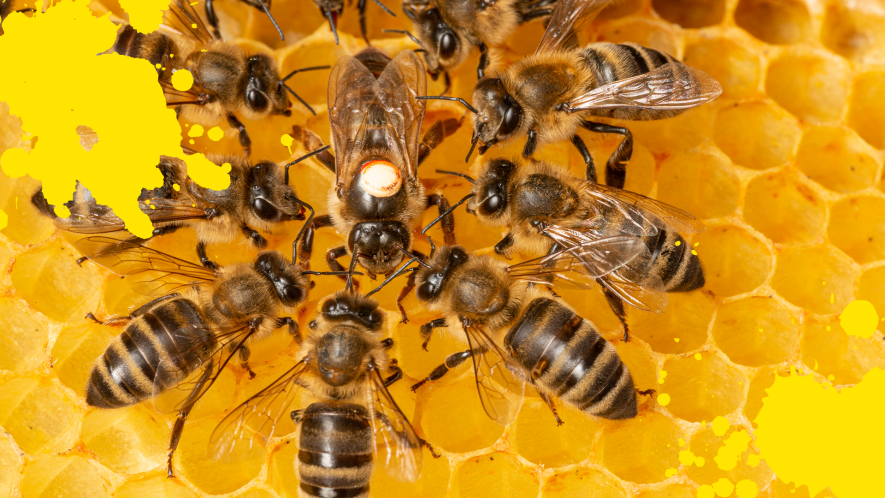 Some bees together on a honeycomb and yellow splats