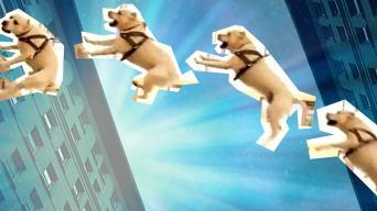 dog parkour