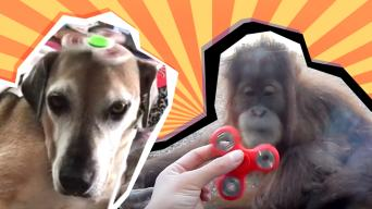 animals with fidget spinners