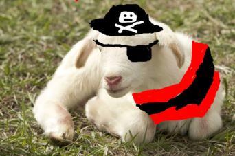 pirate sheep