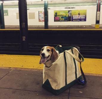 DOG in BAG!