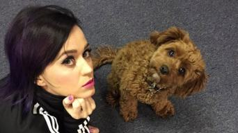 Katy Perry and Butters