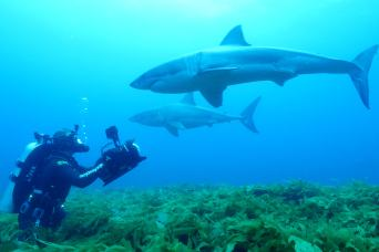 Shark twins