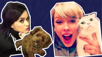 Katy Perry's Dog vs Taylor Swift's Cat