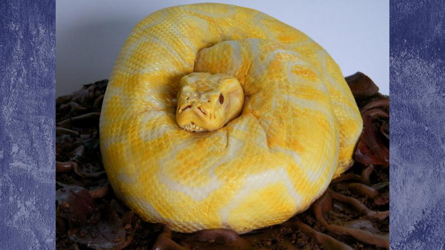 snake or cake?