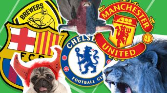 Which Team Is Yours?