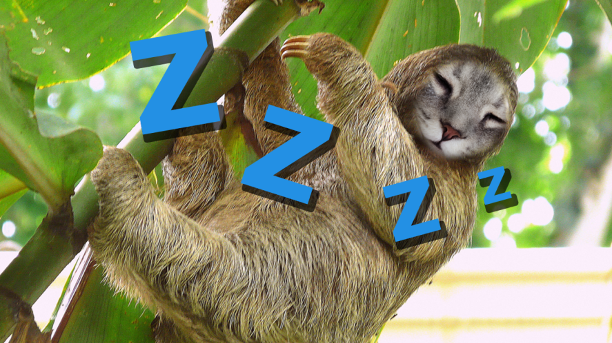 Sloth Olivia