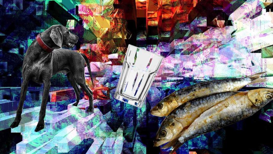 dogmess and sardine smoothie