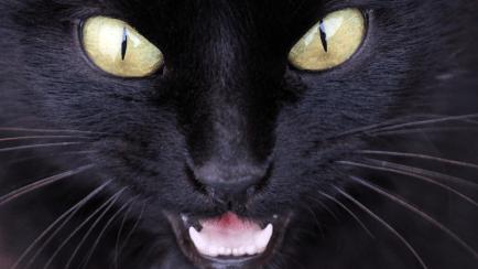 scary cat!