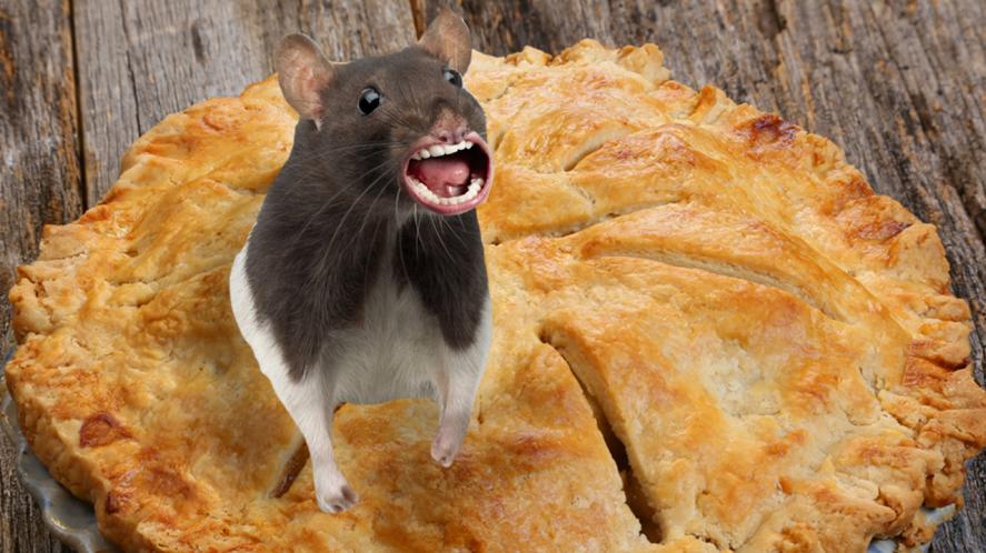 a Pie Rat