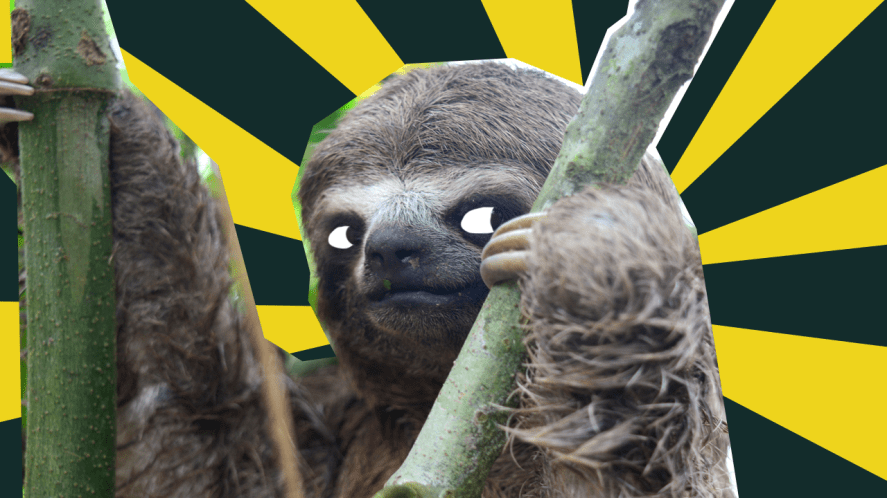 Sneaky Sloth