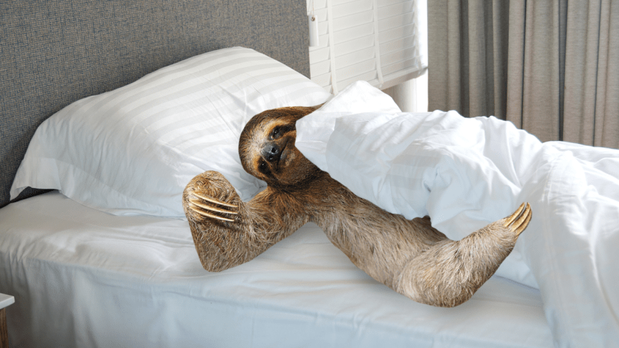 Sloth in bed